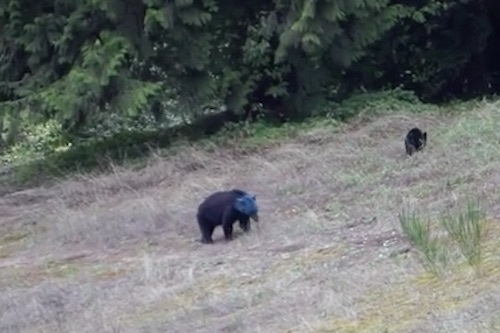 blue-bear-top.jpg