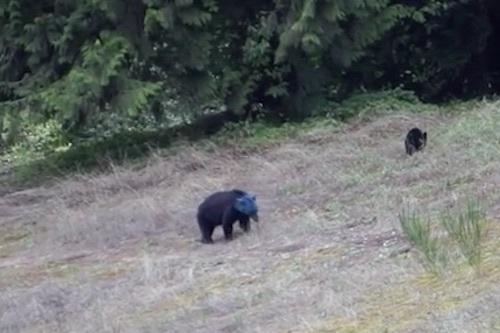 10blue-bear-top2.jpg