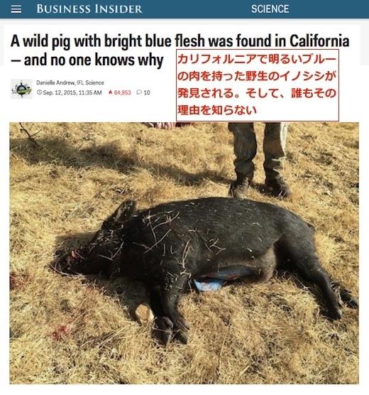 blue-flesh-pig-top.jpg