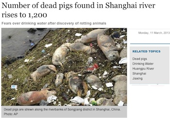 dead-pigs.jpg