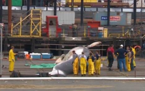 alaska-whale-02.jpg