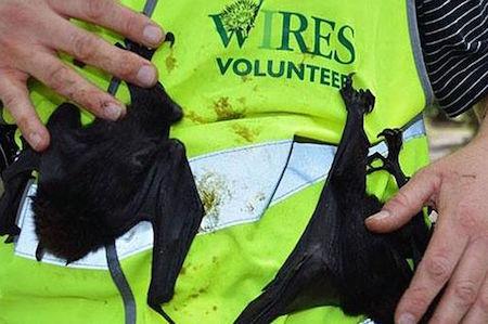 Dead-bats-Casino-1.jpg