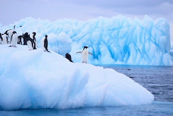 antarctic-penguins.jpg