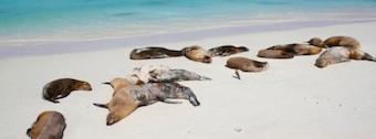 dead_sea_lions2.jpg