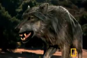 dog-attack.jpg