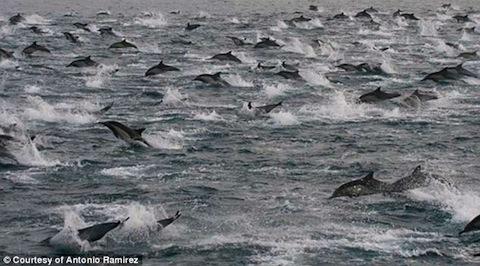 dolphin-2013-01.jpg