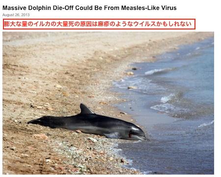 dophin-measles.jpg