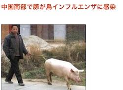 pig-b01.jpg