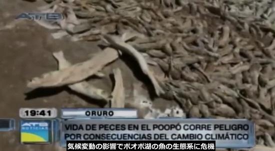 poopo-fish-01.jpg