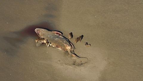 ru-dead-whales.jpg