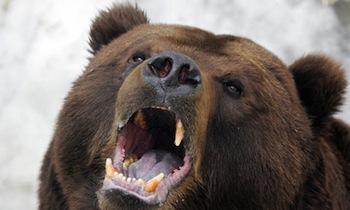 russian-bear-006.jpg