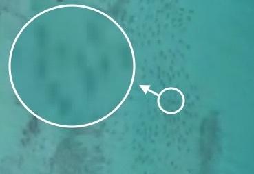 shark-spotted.jpg