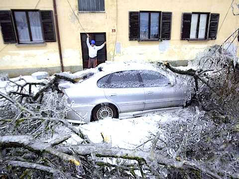 slovenia-car-tree.jpg