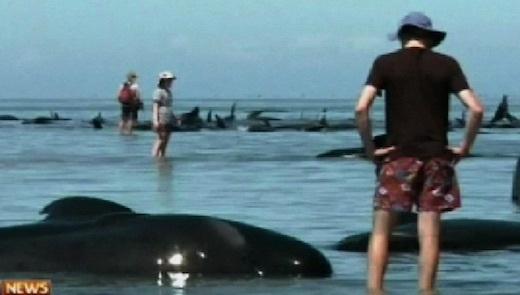 whales-bbc-01.jpg
