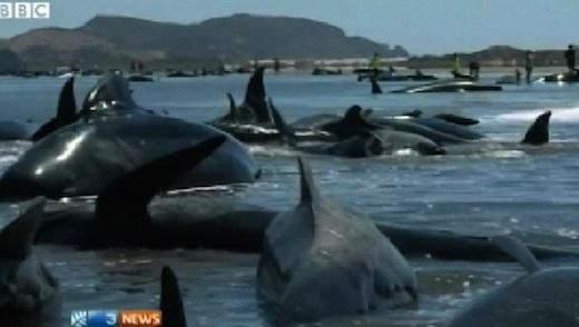 whales-bbc-02.jpg